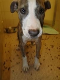 Urgent Adorable Baby Tigger Needs A Loving Home Arlington Texas