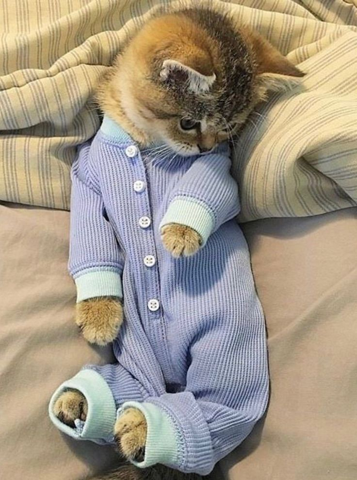 Look at this cutie in his little pajamas. Why can't all