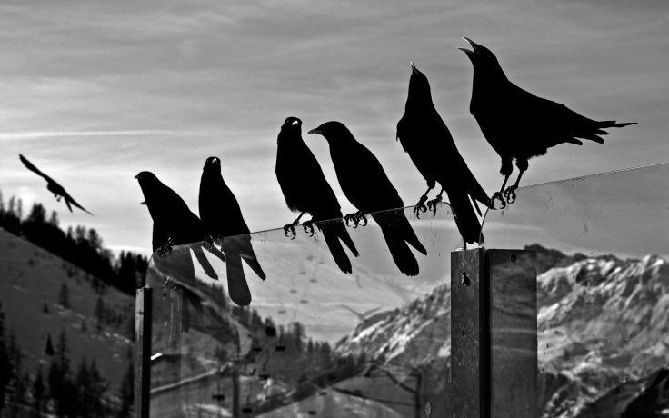 Crows Animals Birds Ravens Black White Bw Glass Mountains Nature Sky Wallpaper Background