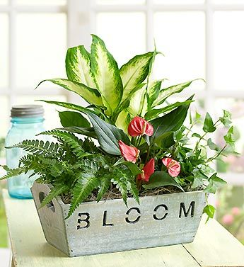 Bloom Where You Are Planted House Warming Gift Plants Container Gardening Flowers Dish Garden