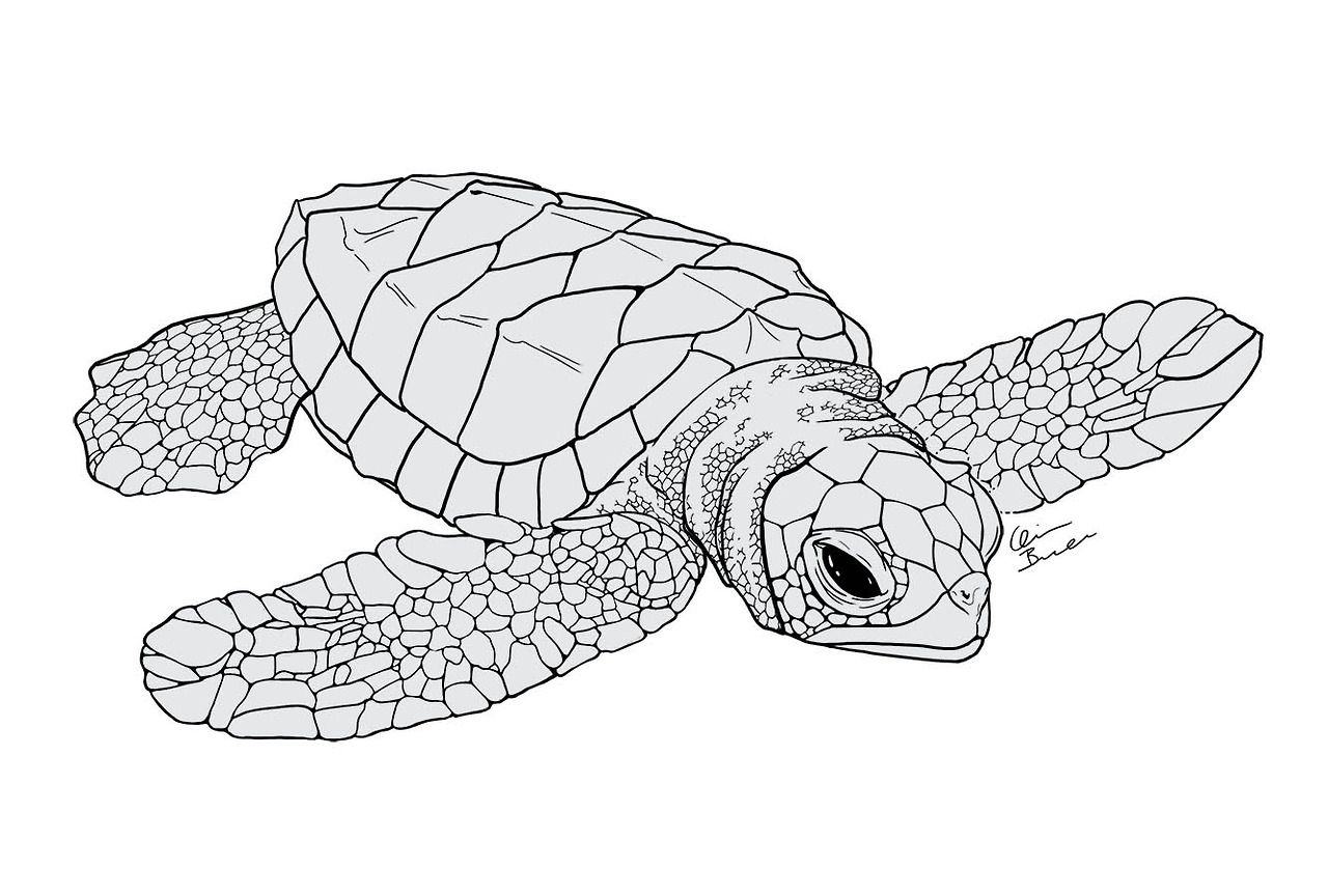 Quinnidae Baby Sea Turtle I Started A While Ago Probably A