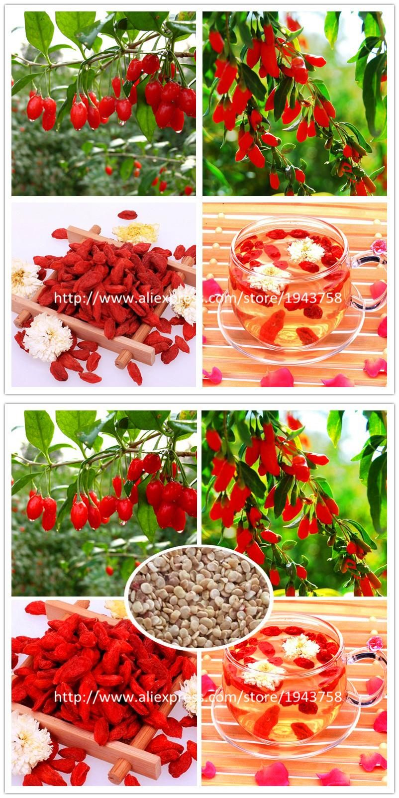 Visit To Buy 200 Himalayan Tibetian Goji Berry Seeds Wolfberry