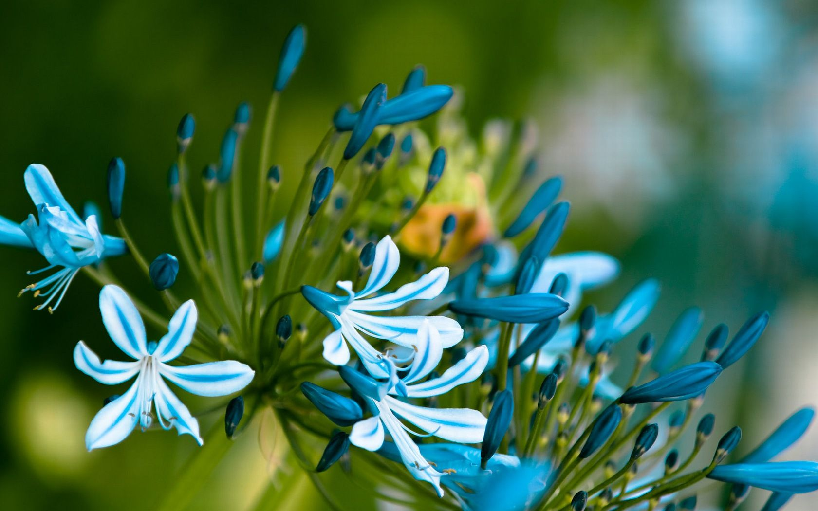 Fond duécran hd fleurs bleues jardins pinterest