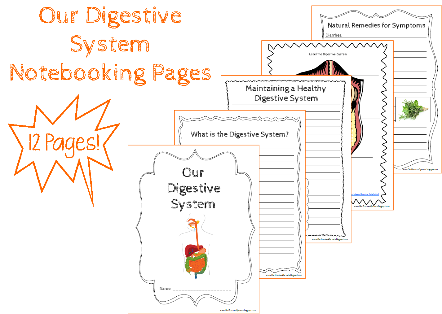Free Digestive System Notebooking Pages And Free Online