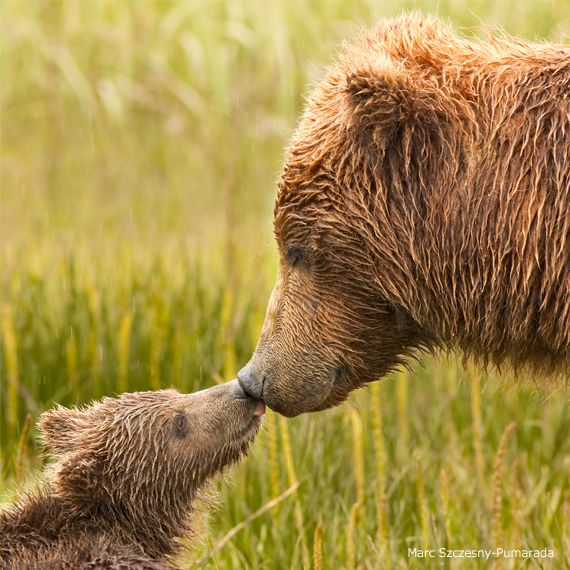 Photo Of The Week: Beary Affectionate 05-09-2012 // NWF