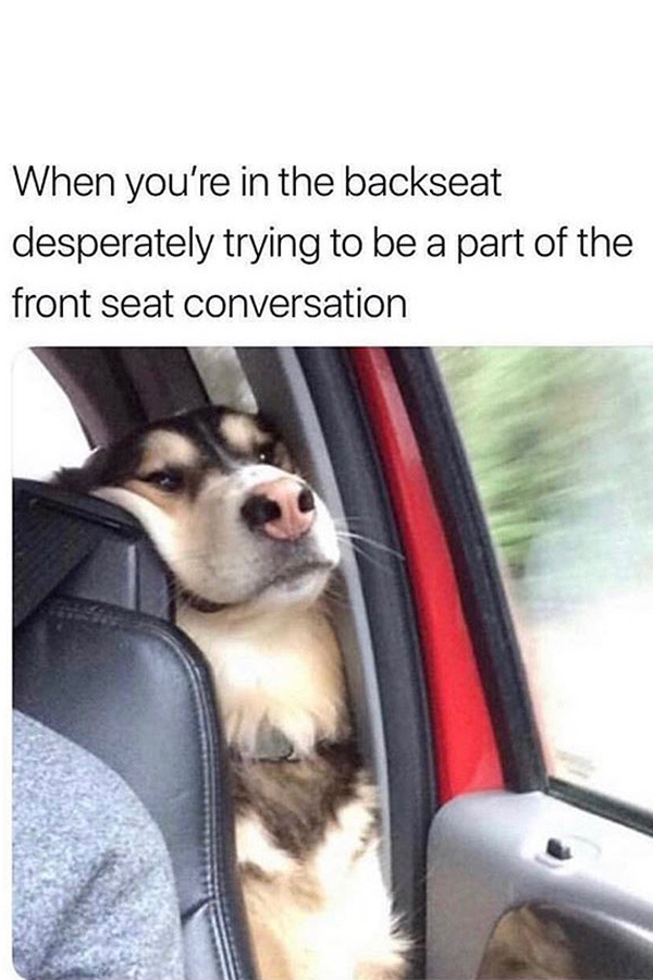 The Best Dog Memes Of 2019 By Small Animals Enjoy The Funny Dogs Meme Funnyanimalmemesdogs Dogmeme Memedog Dogsinwe Funny Dog Memes Dog Memes Animal Memes