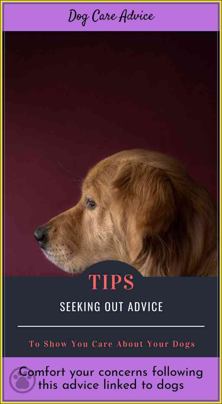 Allay Your Concerns With This Dog Care Advice Dog care