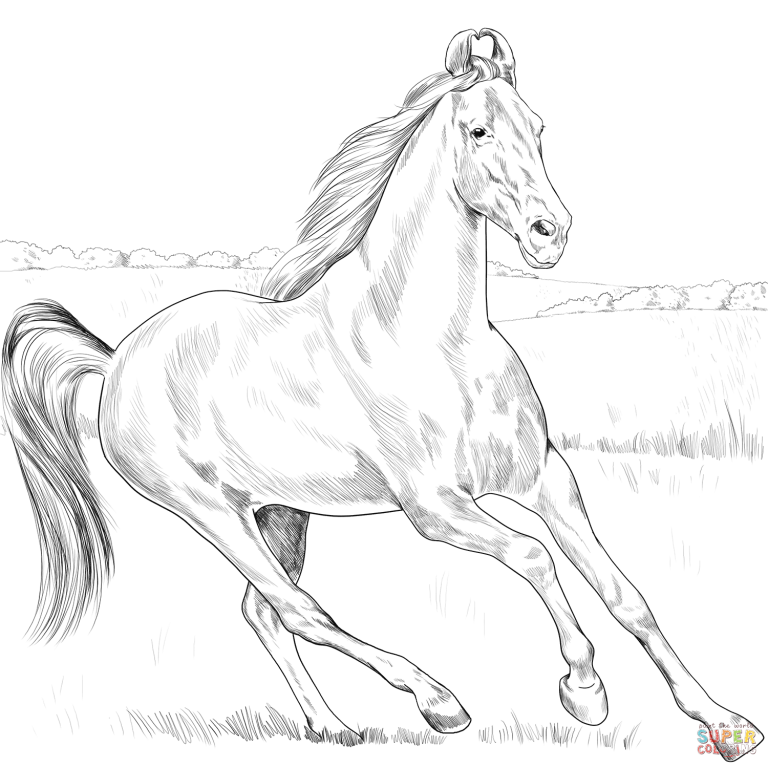 Arabian Horse coloring page from Horses category. Select from ... | 768x768