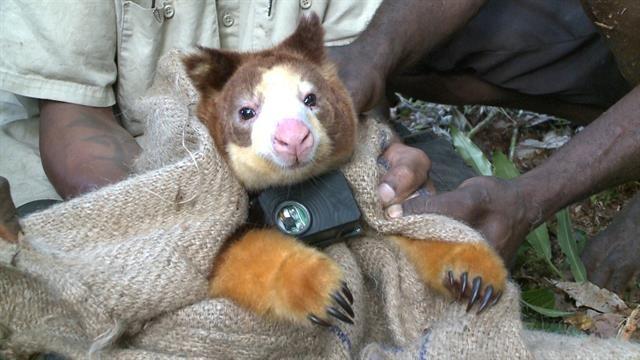 Real Life Teddy Bears Of The Rain Forest Sloth Gif Teddy Bear Bear