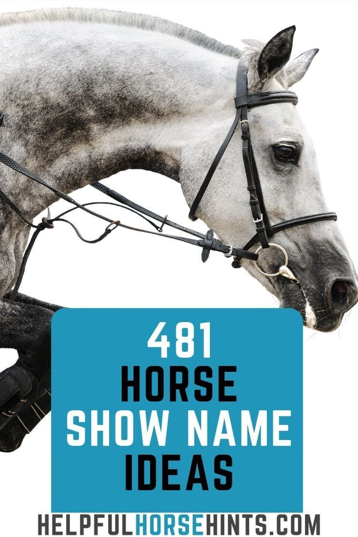 481 Show Name Ideas for Your Horse Horse show names
