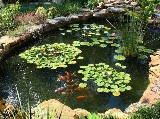 Comment Faire Notre Propre Bassin De Jardin En 7 Etapes