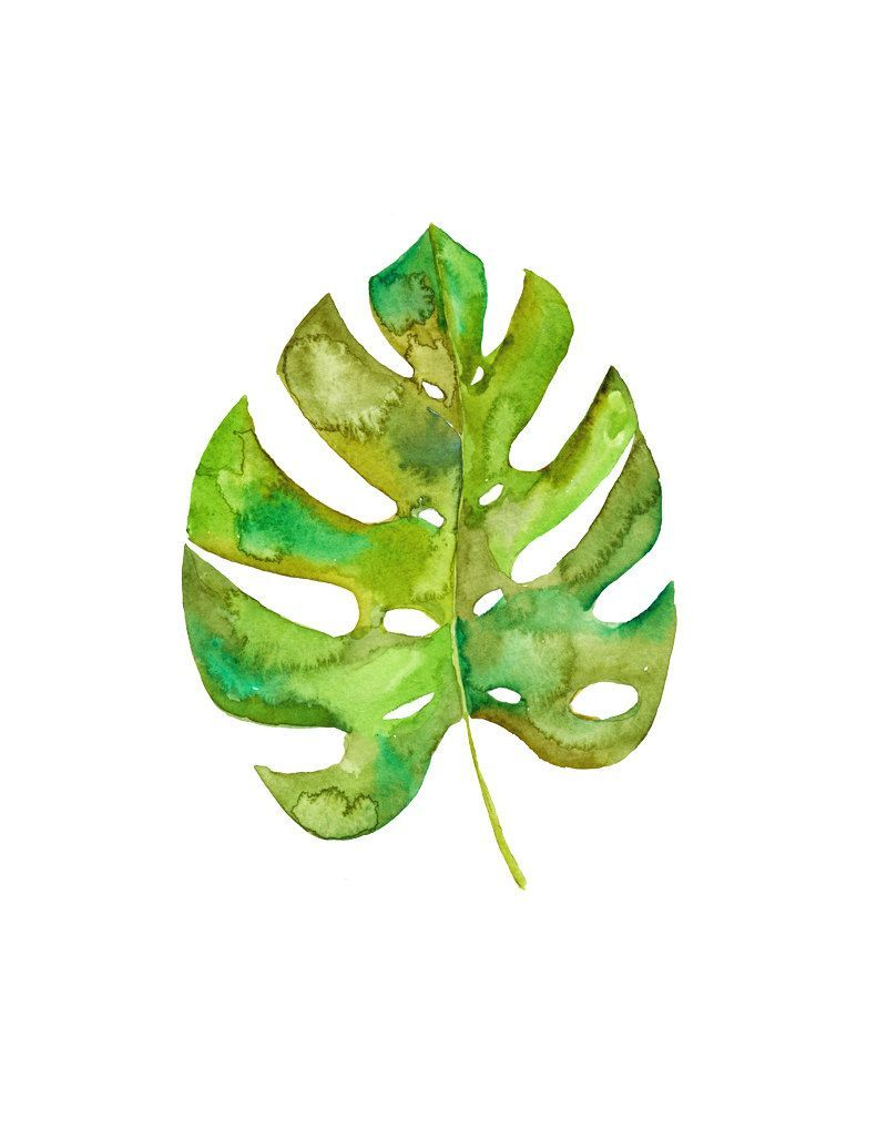 Monstera leaf art print watercolor monstera botanical - Leaves paintings and drawings ...