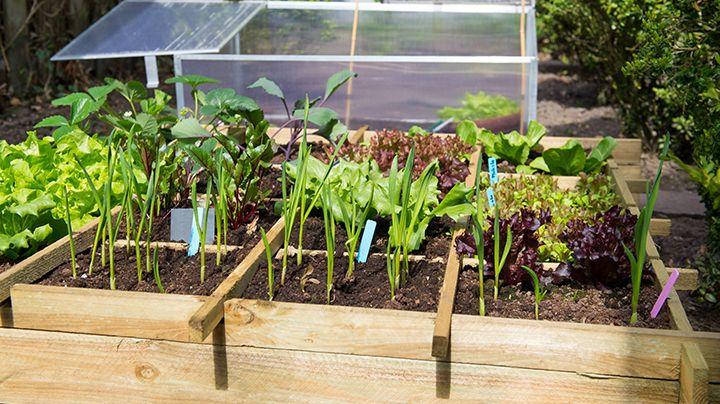 Vierkantemetermoestuin dit moet je weten u de tuin op tafel