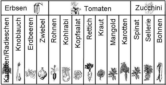 Anbauplan Im 3 Jahr Hochbeet Garten Hochbeet Pflanzen