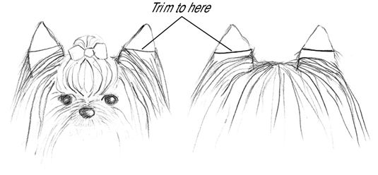 Trim the hair on the ears about half the way down on both