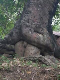 Liefde tussen 2 bomen
