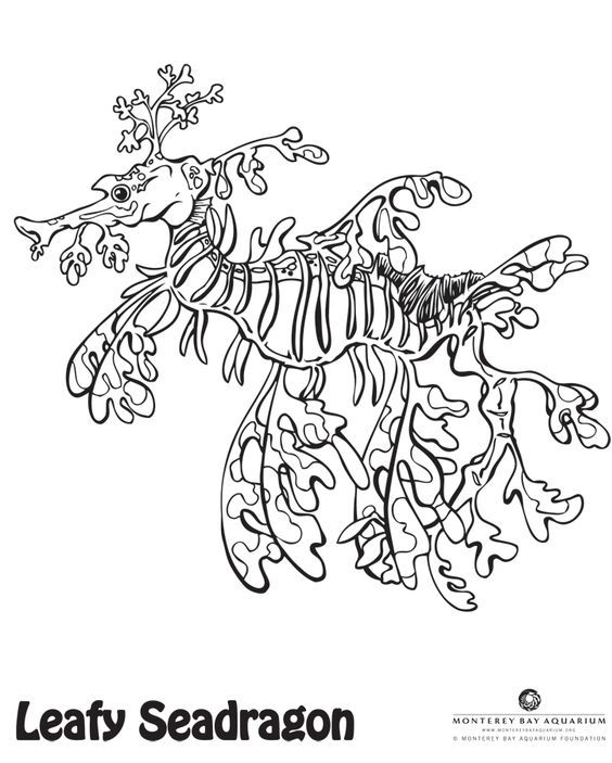 What colors will you make this leafy sea dragon?: | Ocean Arts and ...