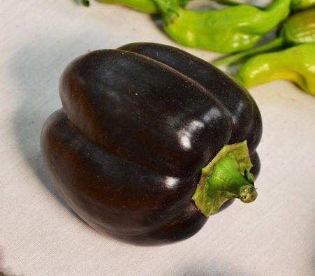 chili pepper Ebony