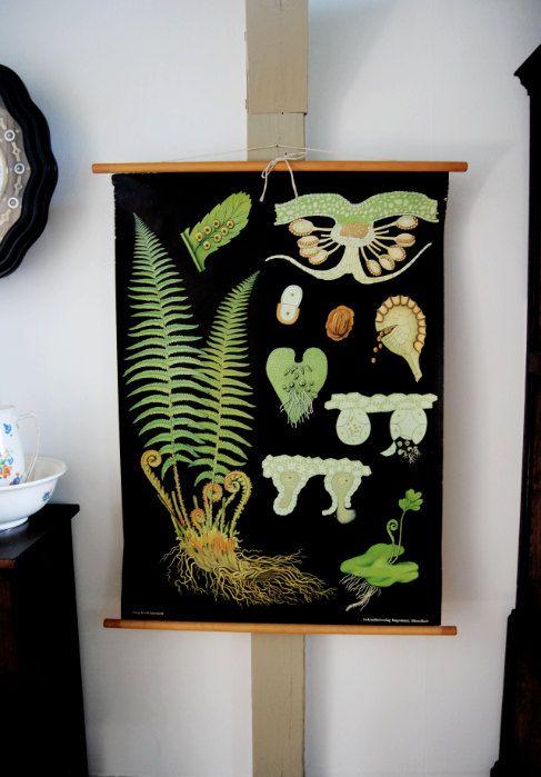 botanical chart of the male fern - theabandonedschool - etsy