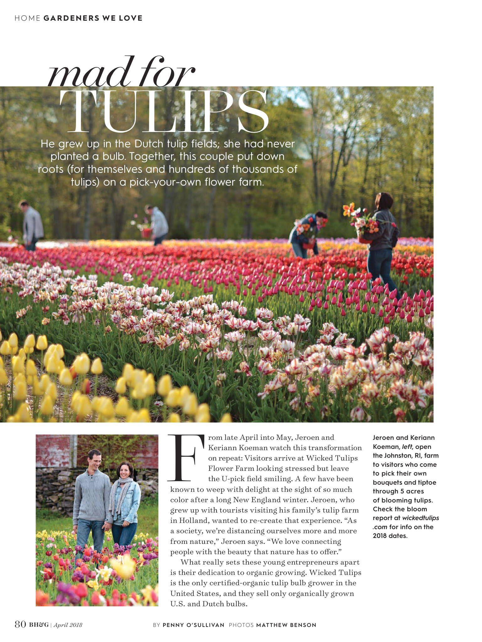 better homes and gardens article april 2018 – wicked tulips flower