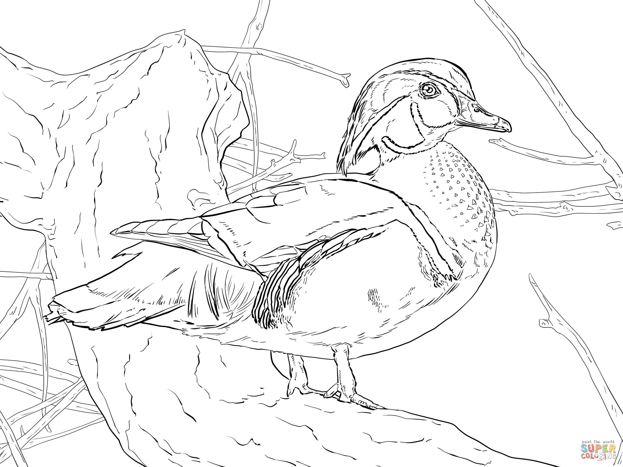 Wood Duck Drake Coloring Page Supercoloring Com Coloring Pages