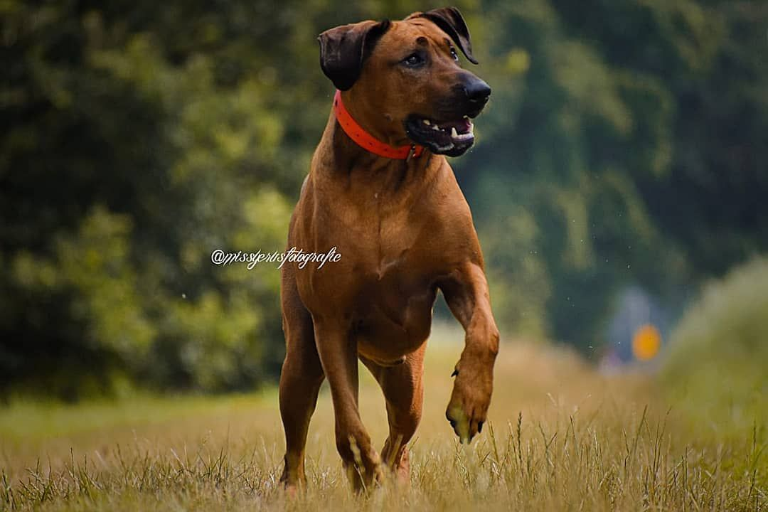 The Beautiful And Perfect Model Biko Worldpictures Dogs