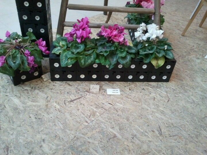 Recycled video tape planters hold cyclamen .At  an ecological fair.