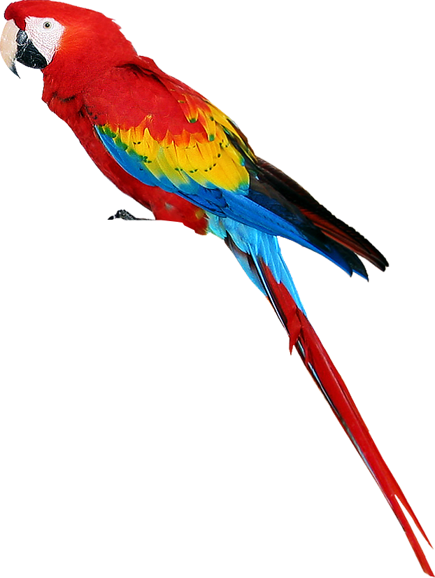 pin by madan kumar on birds png pinterest colorful colorful macaw clipart macaw head clipart