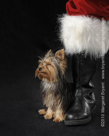 What about dogs nearby Santas big shoes?
