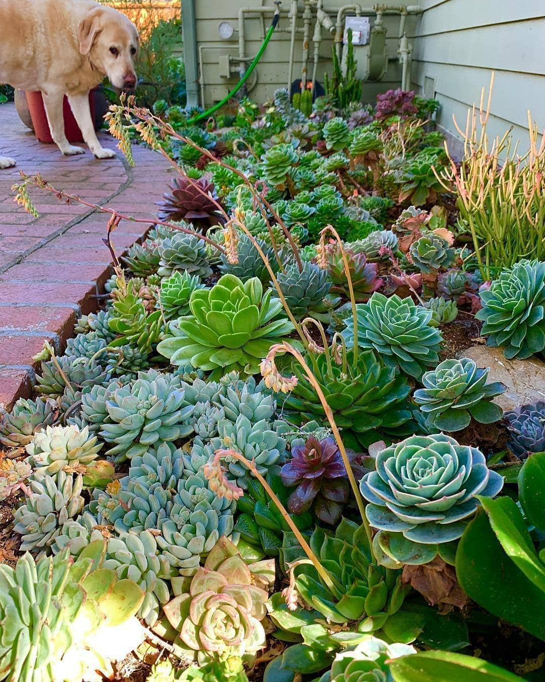 """Photo of Olivra Homedecor on Instagram: """"Outdoor Succulent Garden Arrangement? Share with one of your Friends??? ?Follow us @olivra.cactusucculents ??Follow us…"""""""