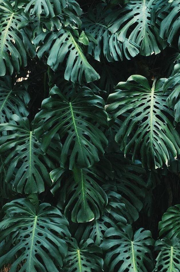 Pin Paytonbrous Plants Plant Aesthetic
