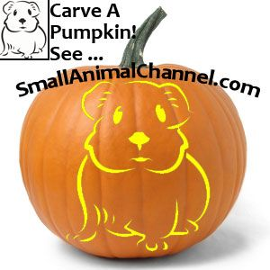 Yes You Can Have A Pumpkin Carved With A Pattern For A Rabbit