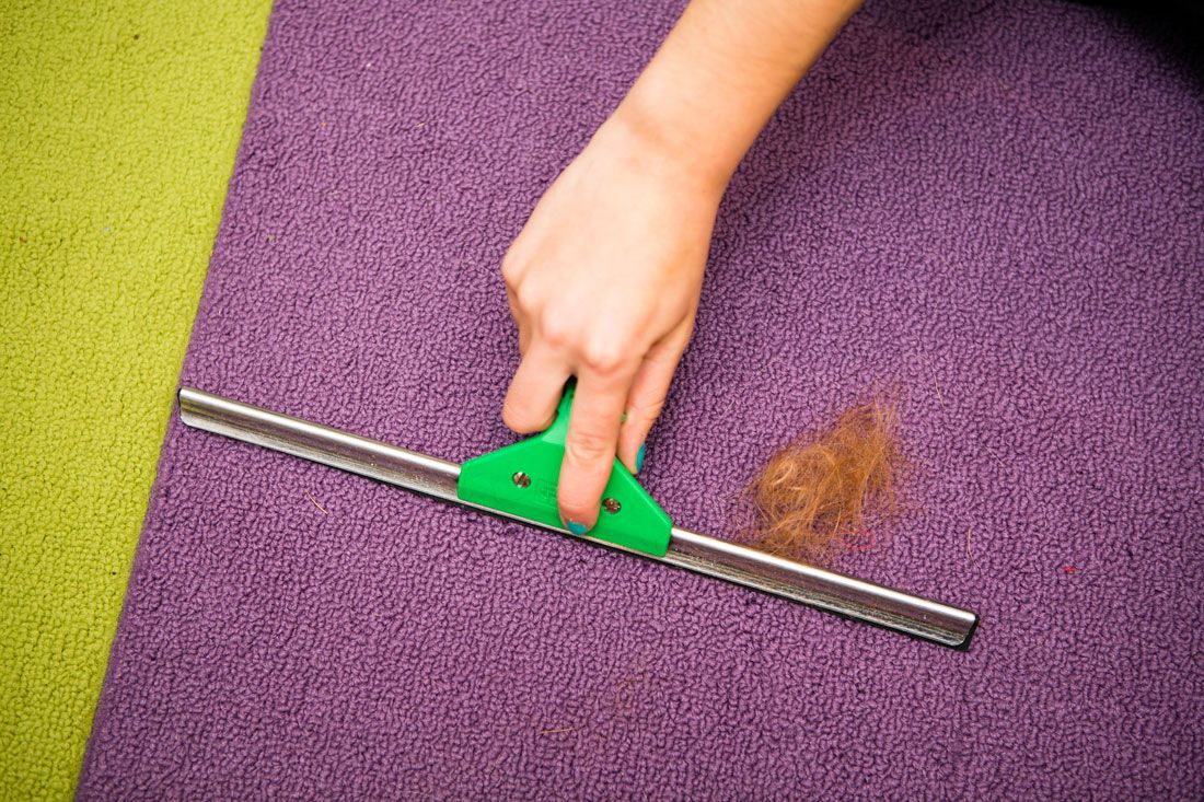 Window Squeegee to Remove Pet Fur From Carpets: It seems counterintuitive, but squeegees actually work great for collecting fur on carpets, especially in all of those nooks and crannies that vacuums can't get to.
