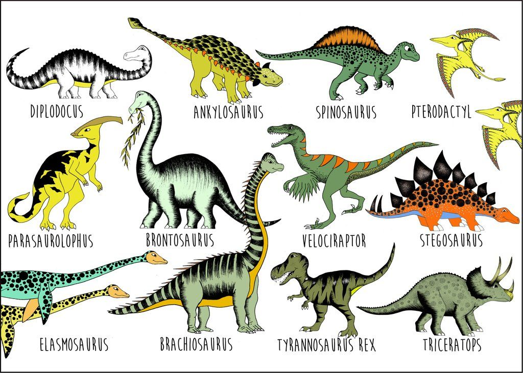 Dinosaur Name Chart Large 50cm X 70cm Dinosaur Posters Dinosaur Illustration Dinosaur Types