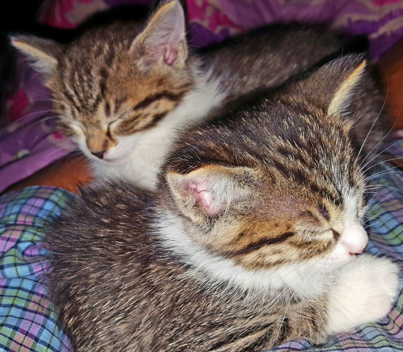 How Do I Describe Bliss Two Tiny Kittens Sleeping Peacefully In The Crook Of My Arm Sleeping Kitten Cat Pics Tiny Kitten