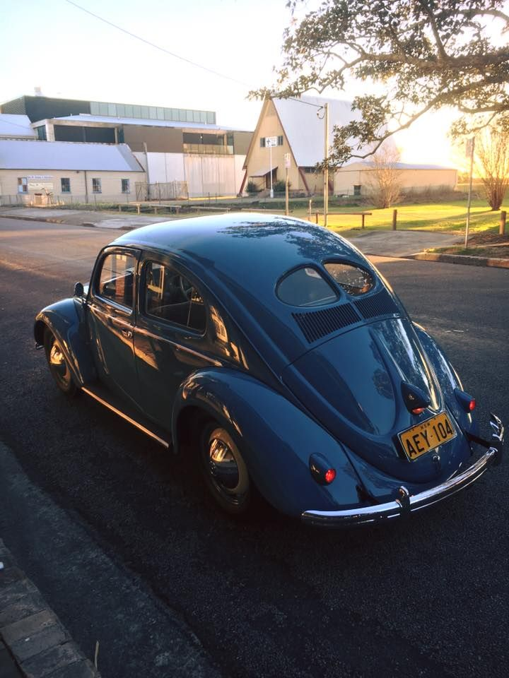 51 Split Vw Bug S Life Volkswagen Vw Beetles Beetle