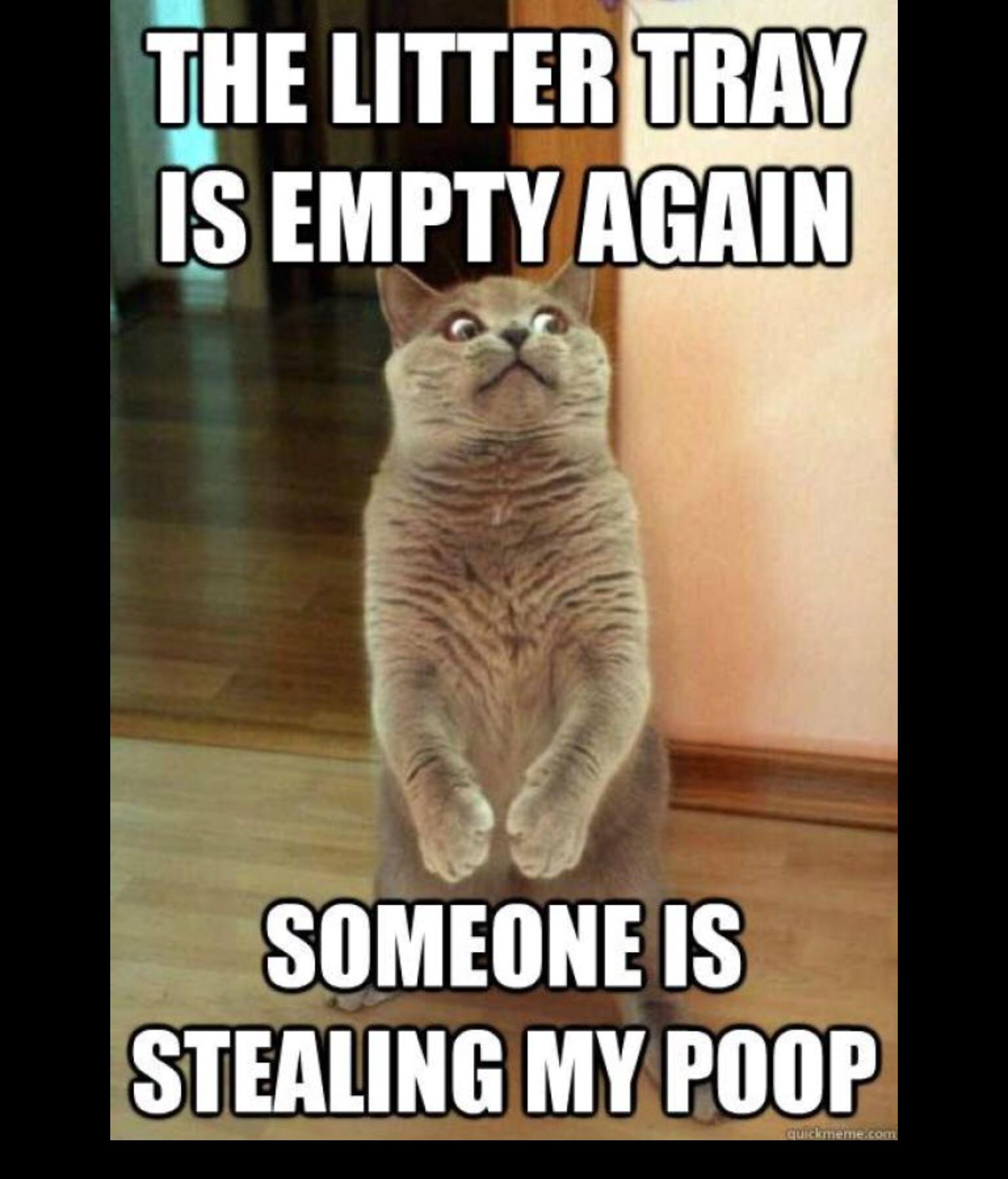 Lol 😝 (With images) Cute cat memes