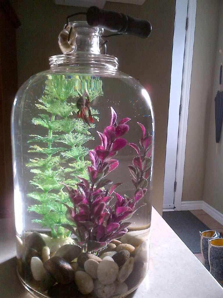 Made an old glass jug into a beta fish tank classroom decor