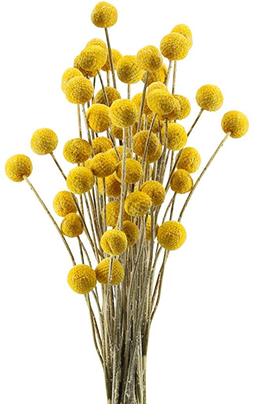 Amazon Com Huaesin 30pcs Natural Dried Flowers Craspedia Billy Balls Flowers Dried Billy Buttons Floral Bouquet Fo In 2020 Tall Vase Decor Dried Flowers Billy Buttons