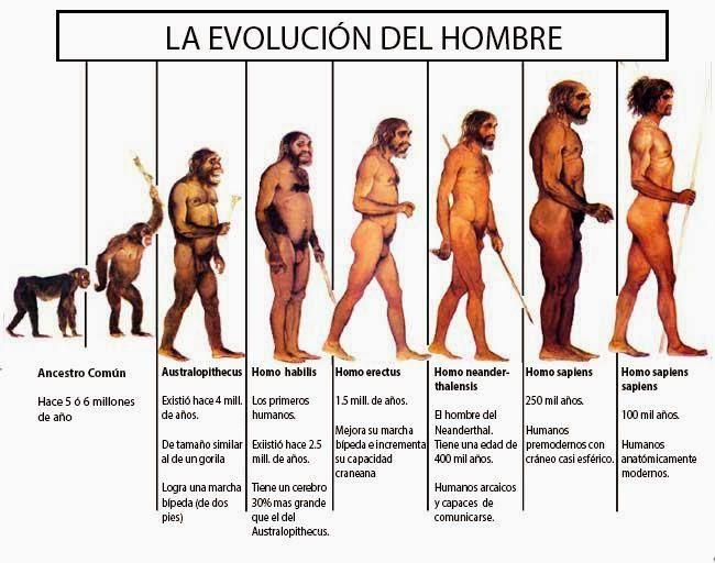 La evolución del Hombre : La cronología acerca del origen y ...