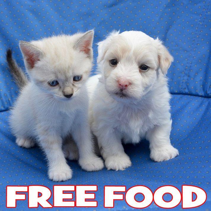 FREE Bag of Dog or Cat Food at PetSmart Exp 10/2/17