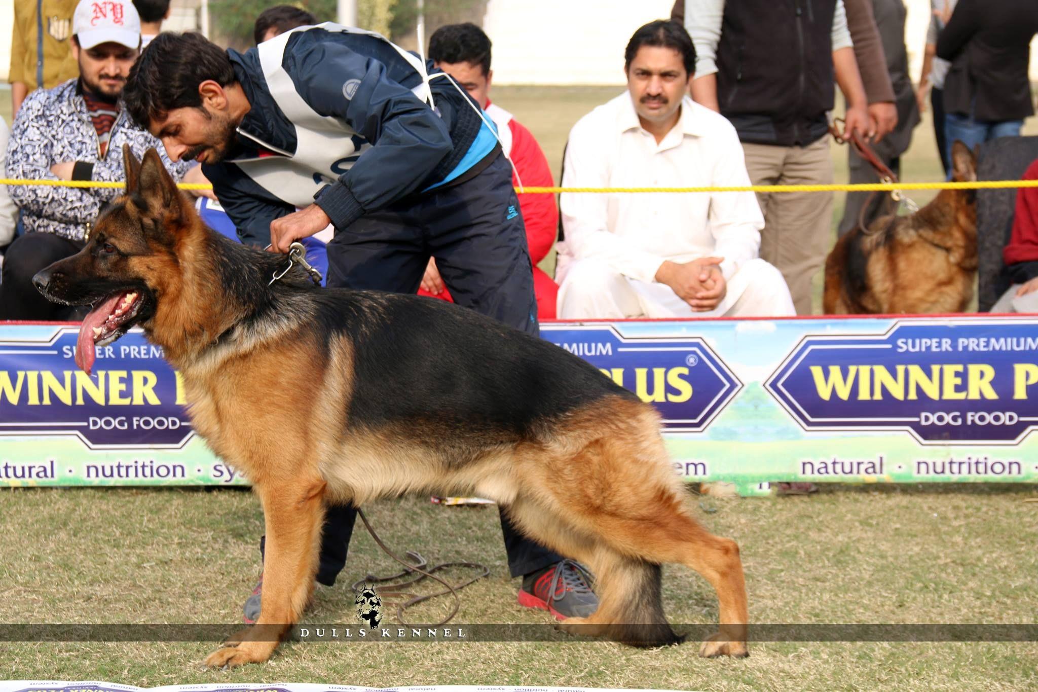 Pin By Ch Rjr On German Shepherd In Pakistan German Shepherd