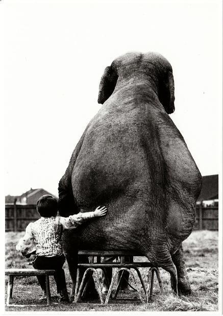 So sweet love the boy and girl w/ elephant photos