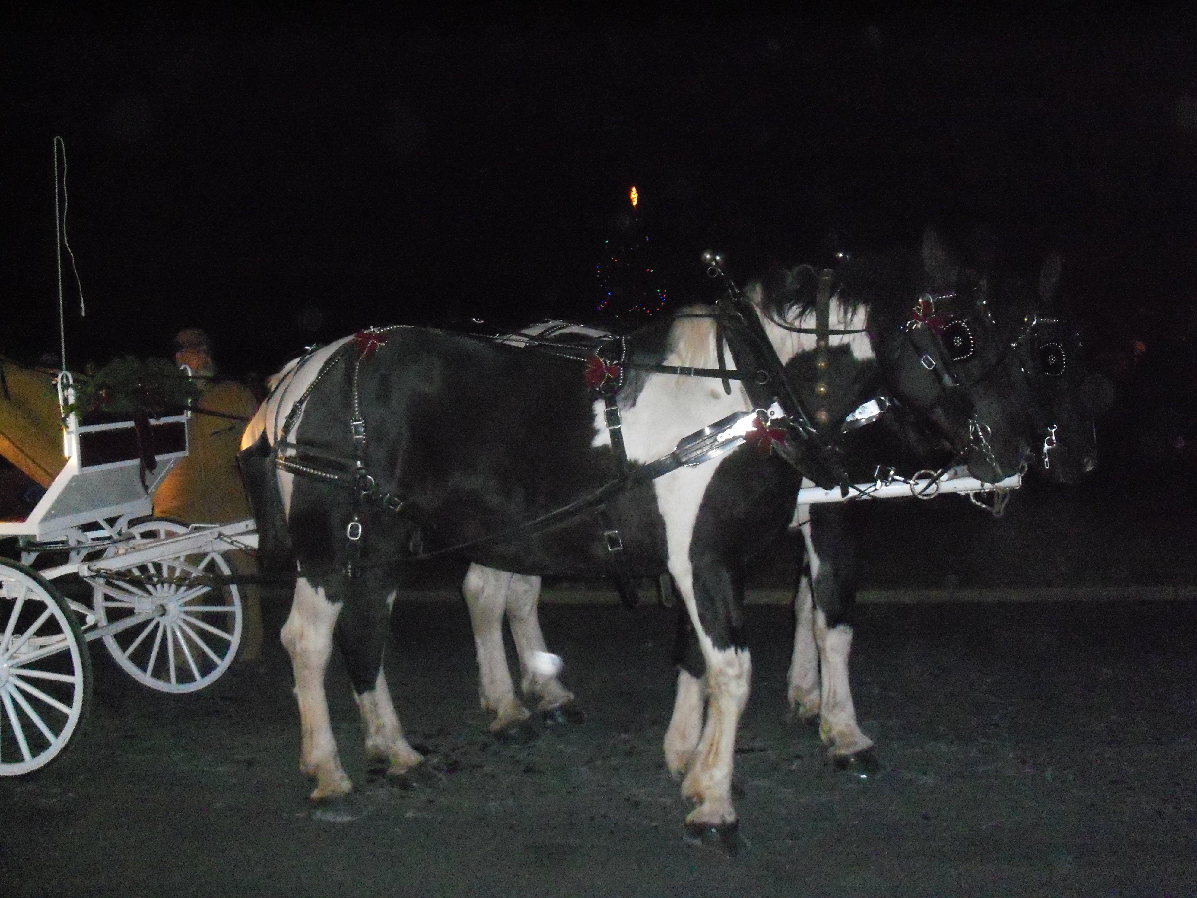 Carlisle Barracks Tree Lighting Ceremony And Carriage Ride