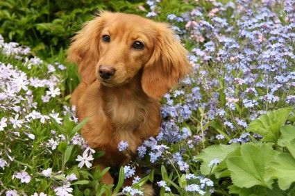 How To Keep Your Pets Safe From Springtime Perils Puppies Pets