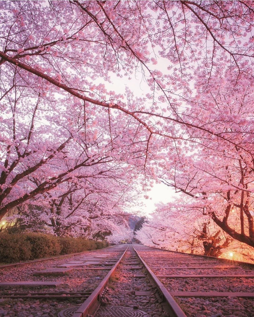 Top 15 Tourist Attractions In Japan Tour To Planet Beautiful Pink Flowers Cherry Blossom Season Japan