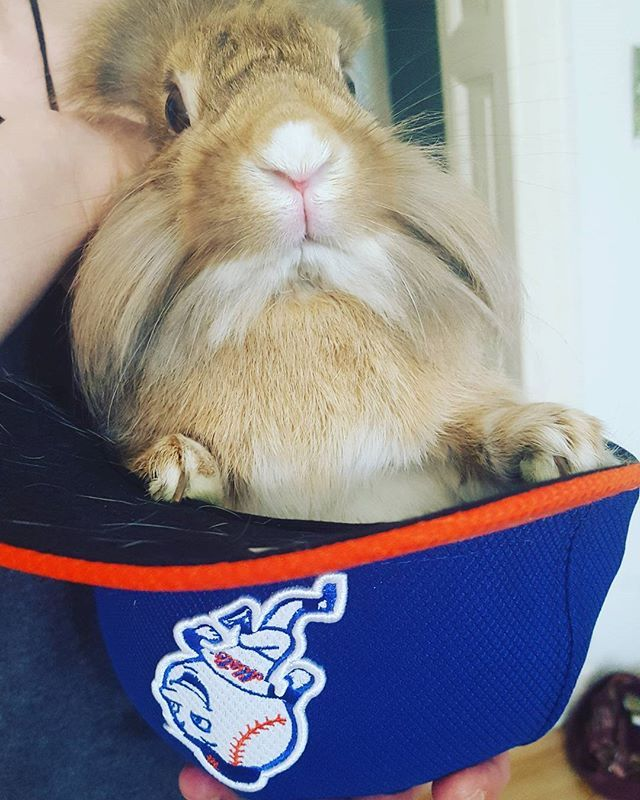 baseball cap met eigen logo york bunny mr