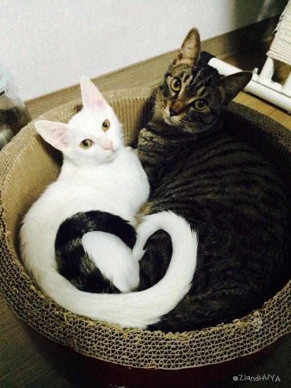 발난로 고양이의 근황 | 유머 게시판 | 루리웹 모바일