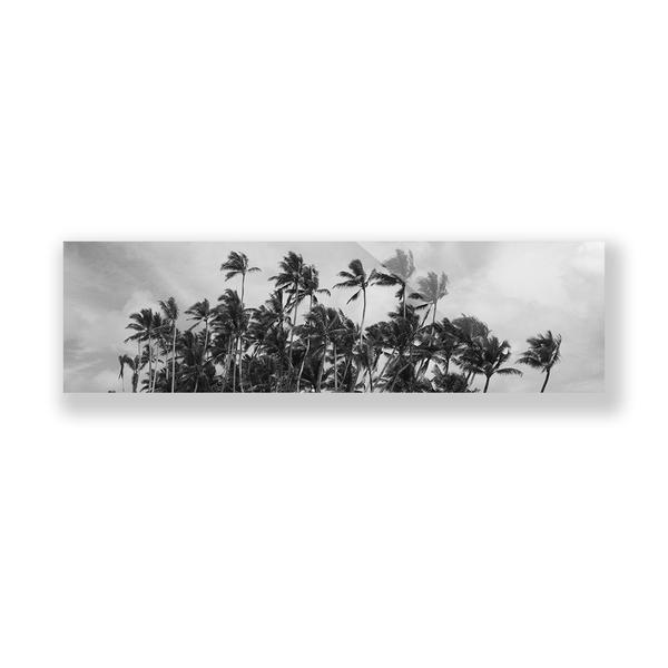 Print on Canvas by Midnight Bantam of Two Palms Art Bazaar