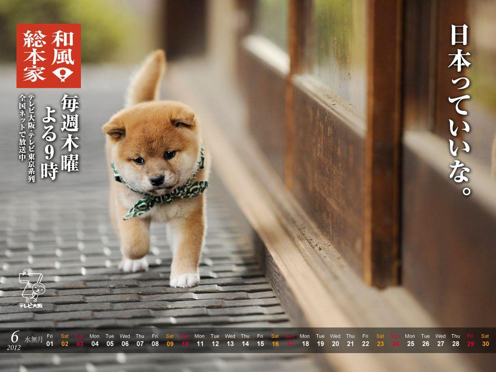 豆助6月の壁紙 柴犬 お犬様 可愛い犬
